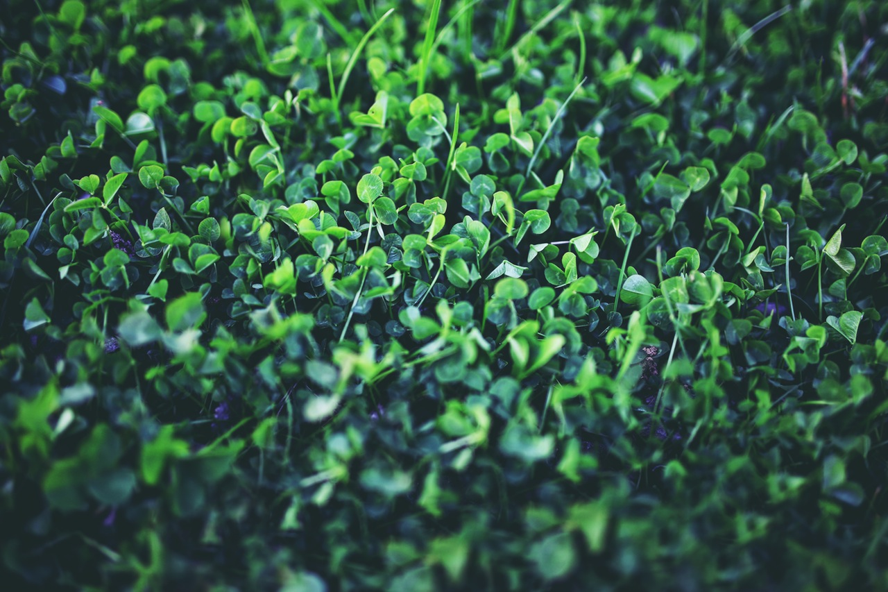 nature-plant-spring-young-5762